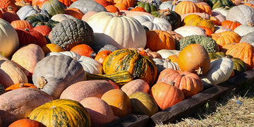 Pumpkin Sale and Tasting, October 17, 10:00 AM–2:00 PM