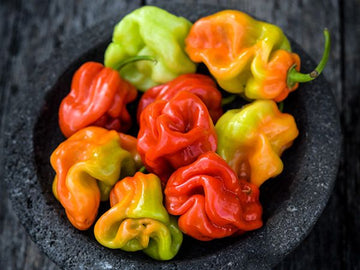 Aji Chombo Hot Pepper (Pkt)