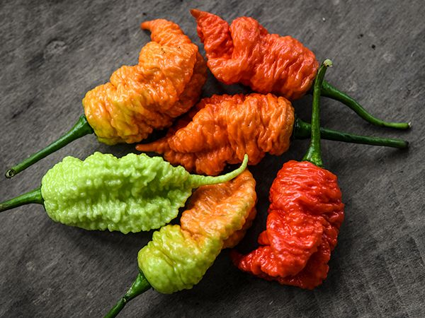 Death Spiral Hot Pepper (Pkt)
