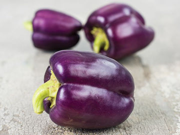 Lilac Bell Sweet Pepper (Pkt)