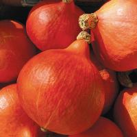 Red Kuri Winter Squash (Pkt)