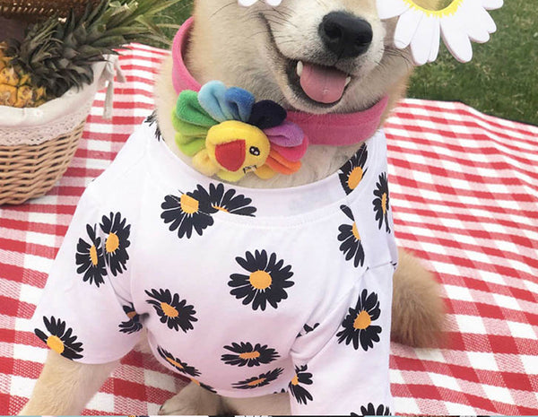 Puppy Clothes Fashion Clothing For Small Medium Dogs Pets Clothing Cat Dog Coat Jacket