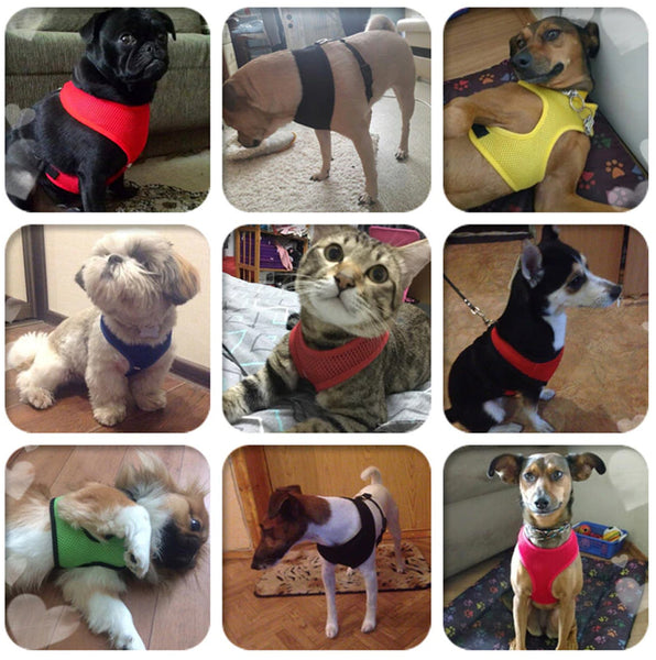 Small & Medium Breed Soft Mesh Harness For DogsCatsWith Chest Strap