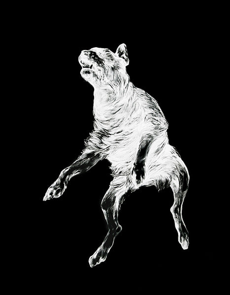 Kate Puxley: Danse Macabre (Dog) art print