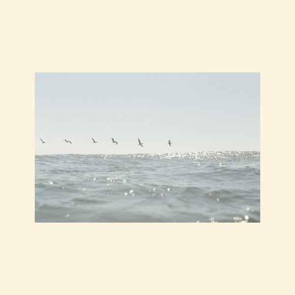 Birds Flying Over Water Print