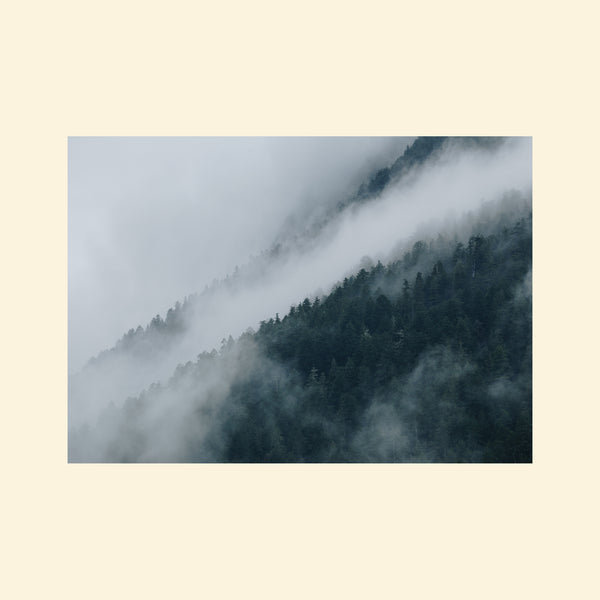 Foggy Pacific Northwest Landscape | Print