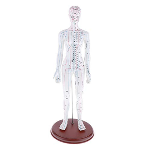 Almencla Model Professional Medical Acupuncture Female and Male - as described, Female