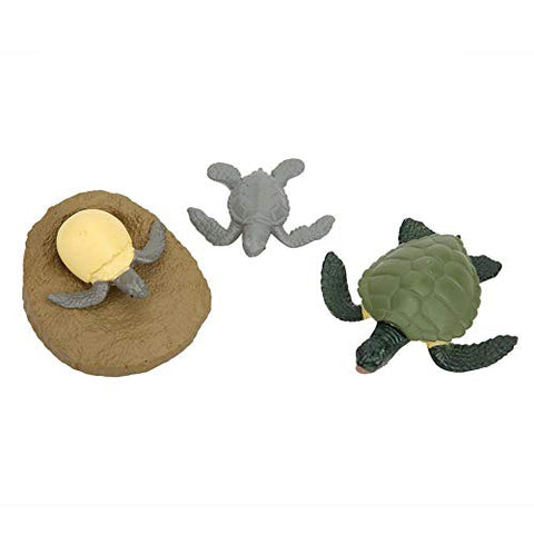 Simulation Miniature Vivid Turtles Growth Cycle Model Plastic Animal Statue, for Kids