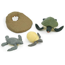 Finely Polished Vivid Highly Simulation Children Animal Model, Life Cycle Model, Safe Kids Child Infants Expand Learning Knowledge(Turtle Growth Cycle)