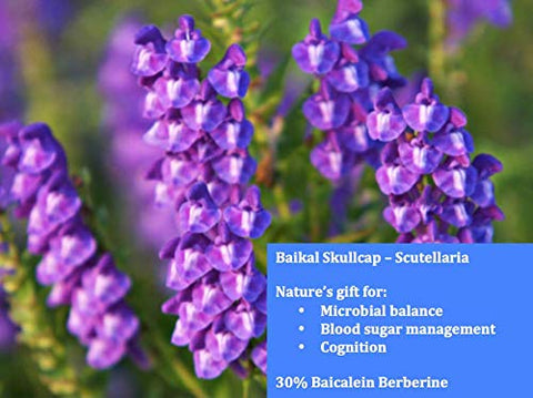 Baikal Skullcap - Baikal Skullcap - High Quality - 50 Servings per Container - Immune Support - Blood Sugar Support.
