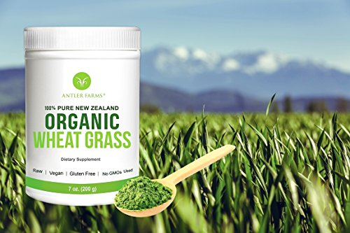 Antler Farms - 100% Pure New Zealand Organic Wheatgrass Powder, 50 Servings, 200g - Raw, Vegan, Gluten Free, Nutrient Rich, High Chlorophyll Wheat Grass, NO Pesticides, NO Chemicals, NO GMOs