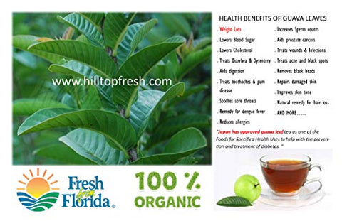 Fresh Guava leaves - ORGANIC - Certified Fresh From Florida - ONLY picked & packed after an order is placed