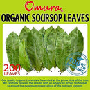 Image of Omura ORGANIC SOURSOP Guanabana Graviola For TEA 200 LEAVES