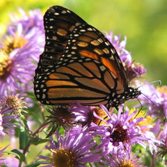 Southeast Pollinator Conservation Mix