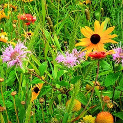 Southeast Butterfly & Hummingbird Seed Mix