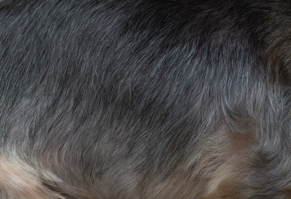 Alopecia and its treatments