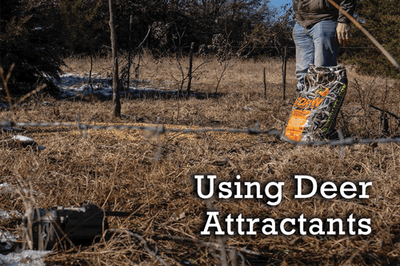 Using Deer Attractants