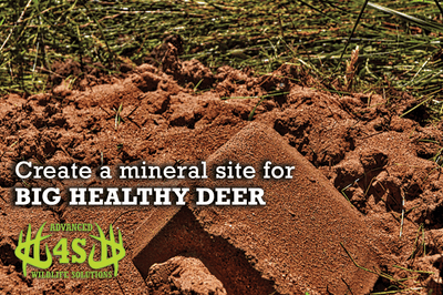 How to create a mineral site for deer