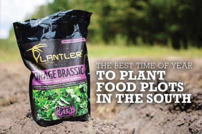 Best Time To Plant Food Plots In The South