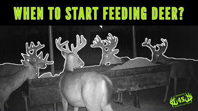 When Should You Start Feeding Deer?