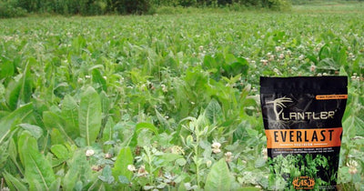 Plantler Food Plot Seed - Everlast