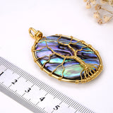 Oval Abalone Paua Pendant with Gold Plated Wire Tree, Medium Size, Pnd4002