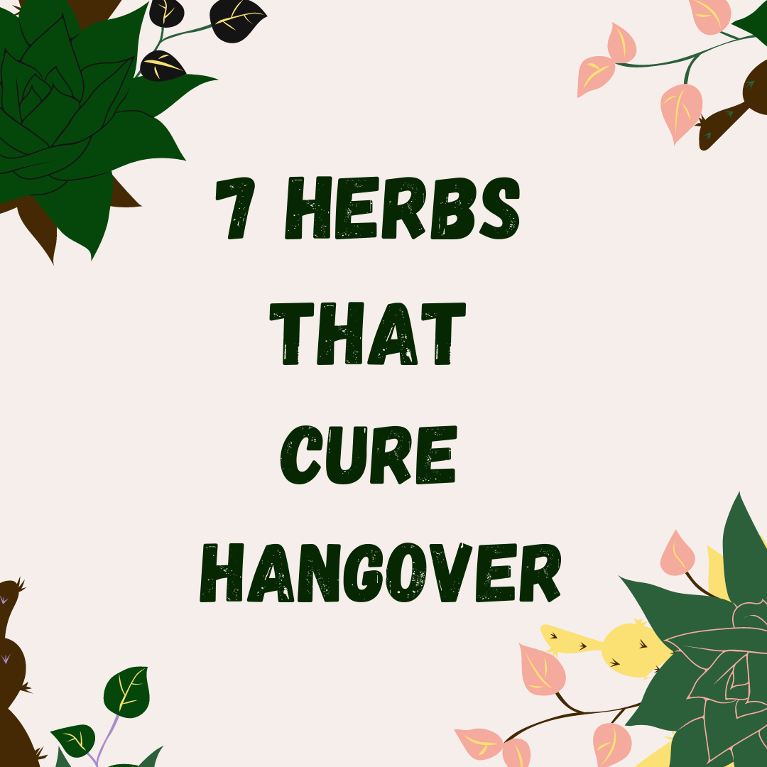 7 herbs that cure hangover iluna