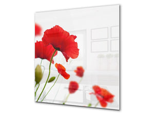 Glass kitchen backsplash – Photo backsplash BS03 Flower Series: Poppy On A White Background 1