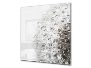 Toughened glass backsplash BS 04 Dandelion and flowers series: Dandelion Drops 5
