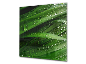 Kitchen & Bathroom splashback BS17 Green grass and cereals Series Leaf Drops Of Water 1