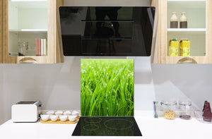 Kitchen & Bathroom splashback BS17 Green grass and cereals Series Grass Leaf Green 3