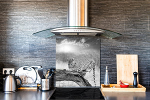 Art glass design printed glass splashback BS21A  Animals A Series: Tiger Black And White 3