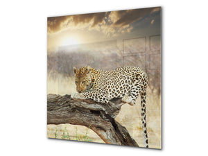 Art glass design printed glass splashback BS21A  Animals A Series: Tiger Color