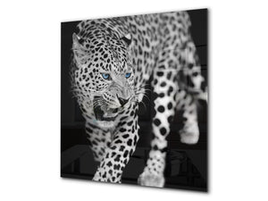 Art glass design printed glass splashback BS21A  Animals A Series: Tiger Cheetah 1