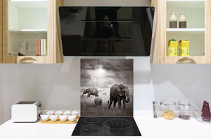 Toughened glass backsplash – BS21B  Animals B Series: Black And White Elephant 9