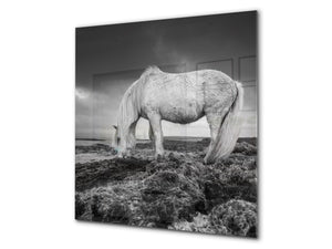 Toughened glass backsplash – BS21B  Animals B Series: Horse Gray