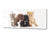 "Glass Printed Picture 125 x 50 cm (≈ 50"" x 20"") – Animals Series 02: Kittens and puppies"