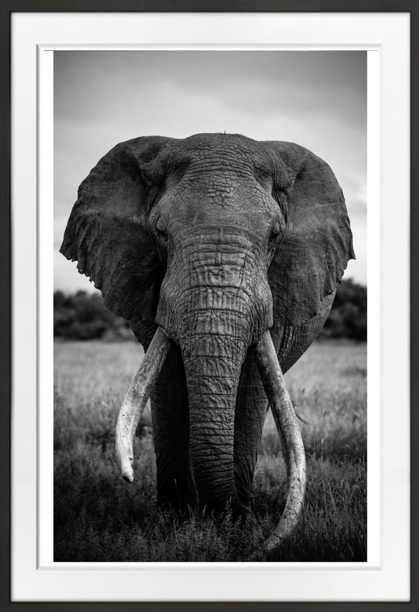 At Peace Prints Prints for Conservation