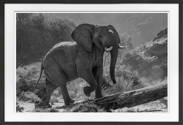 Desert Elephant Prints Prints for Conservation