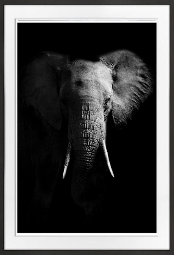 Elephant Portrait Prints Prints for Conservation
