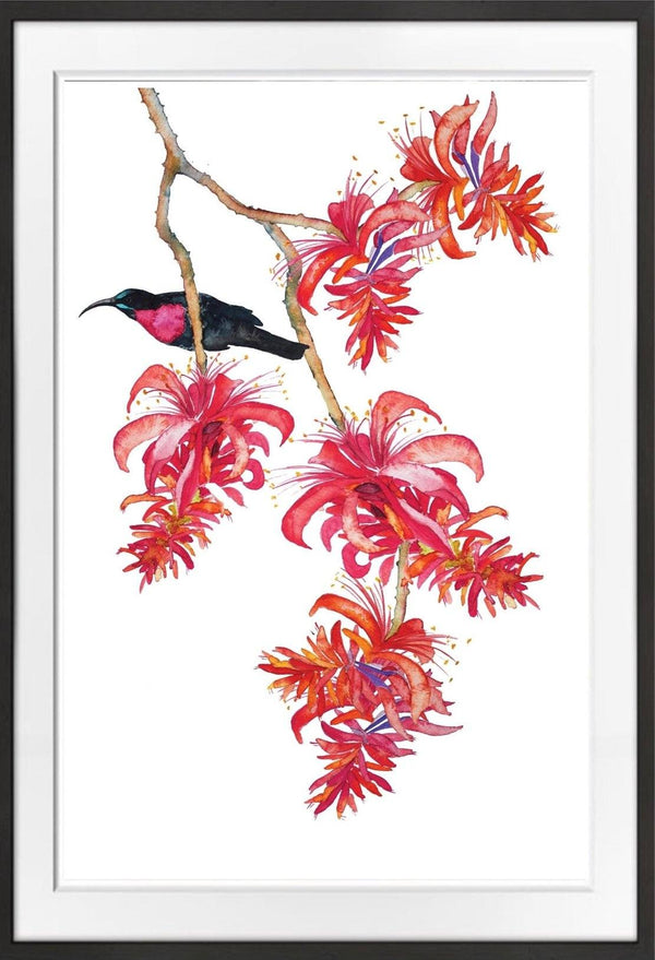 Erythrina and Sunbird Prints Prints for Conservation