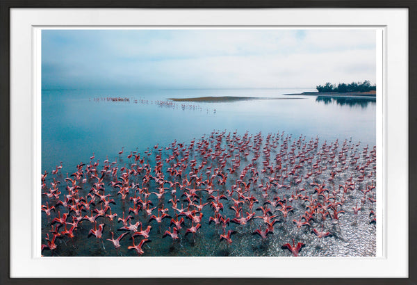 Flamingo Territory Prints Prints for Conservation
