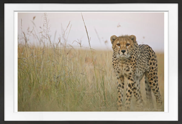 Focus Prints Prints for Conservation