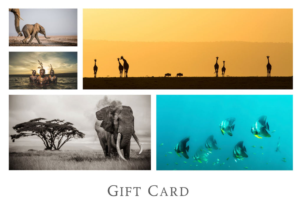 Gifted Cards Gift Card Prints for Conservation