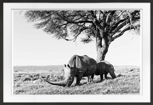 Guardian Prints Prints for Conservation