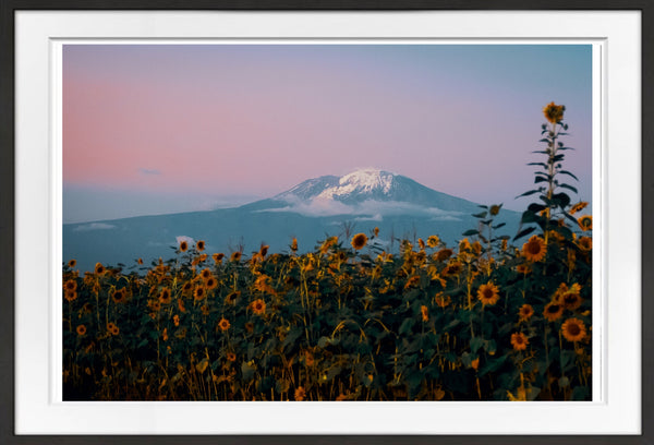 Kilimanjaro Prints Prints for Conservation