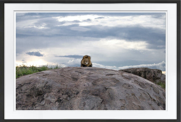 King On His Throne Prints Prints for Conservation