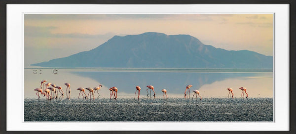 Lake Natron Flamingoes Prints Prints for Conservation