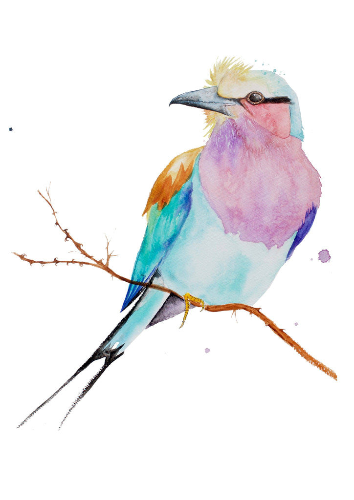 Lilac Breasted Roller Prints Prints for Conservation
