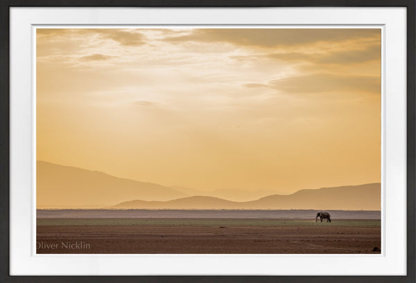 Lone Bull Sunset Prints Prints for Conservation